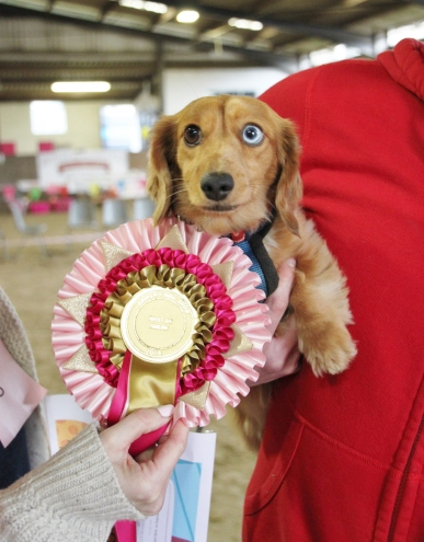 winners best in show 2